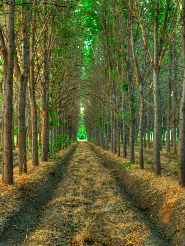 trees27.jpg