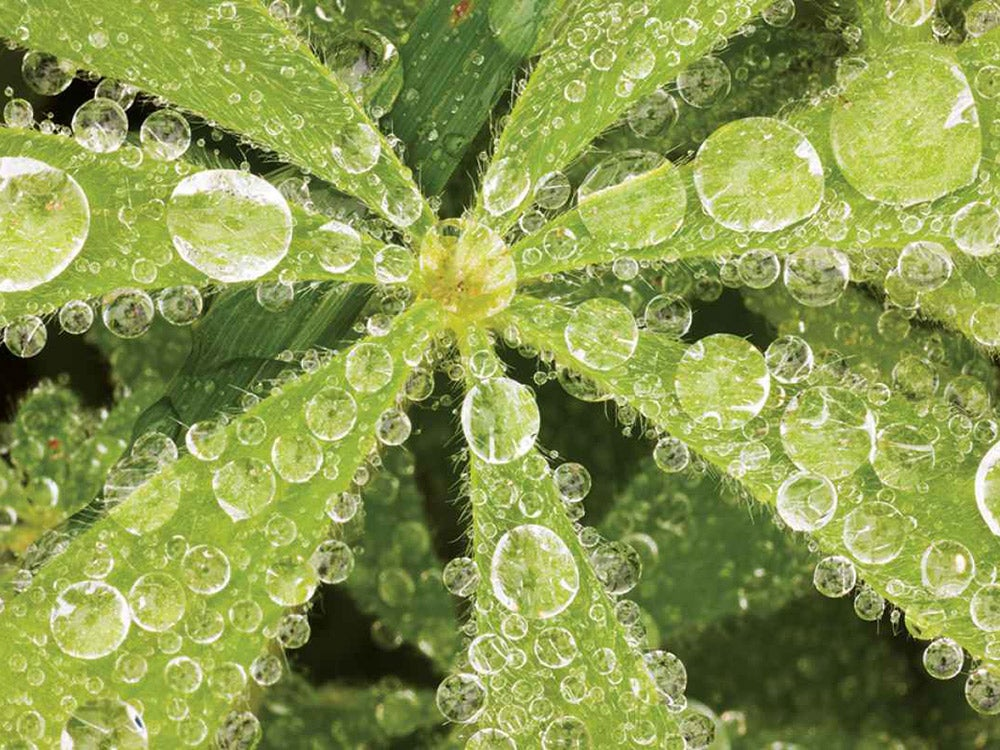 water droplets on a plant
