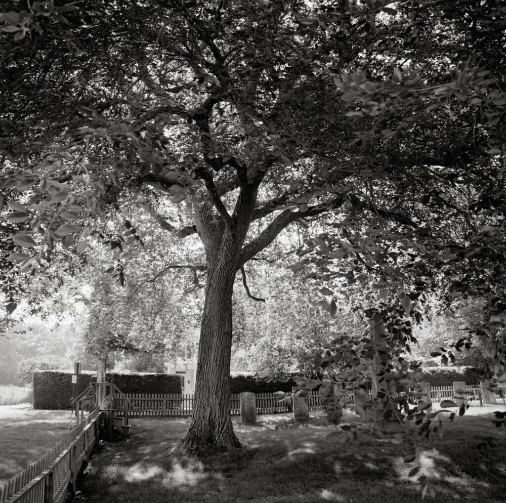 trees01.jpg