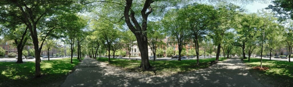 trees05.jpg