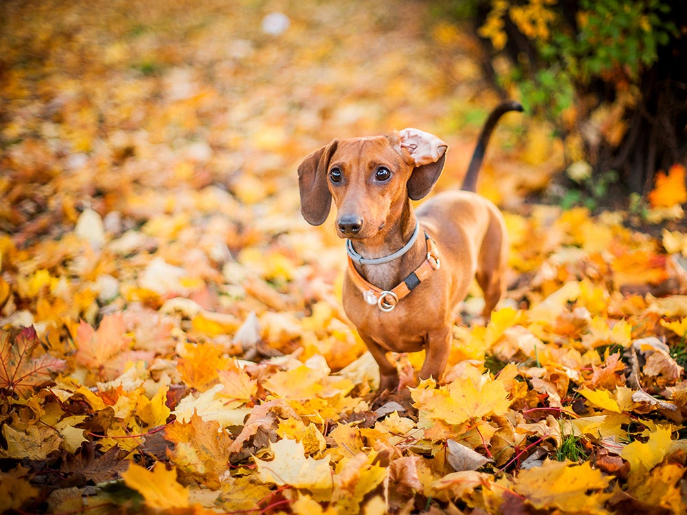 Dog in colorful leaves