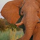 Extreme-Adventure-Series-Botswana-Africa