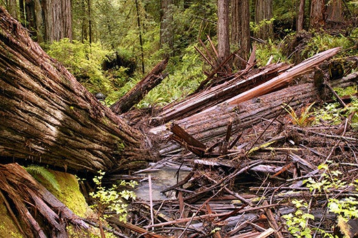 """""""Before-They-re-Gone-Old-growth-forests-are-increa"""""""