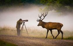 Elk Photographer