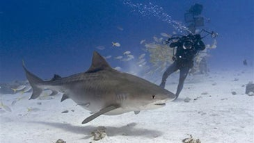 Photo-Adventure-Shooting-Sharks-Without-a-Cage