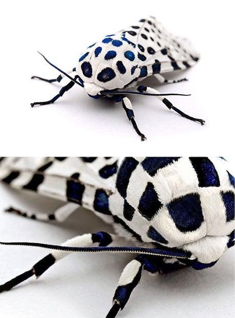 manipulated moth
