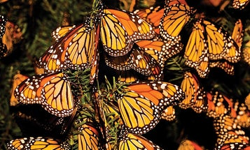How To: Shooting the Great Butterfly Migration
