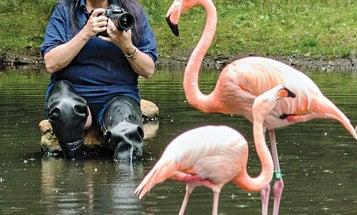 I, Photographer: Zoo Keeper