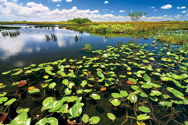 Traveling-Photographer-The-Everglades