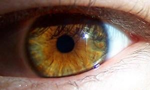Study of the Human Eye Could Lead to More Accurate Auto Focus Technology