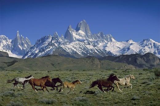 """Wild-horses-below-Fitz-Roy-Patagonia-Argentina"""