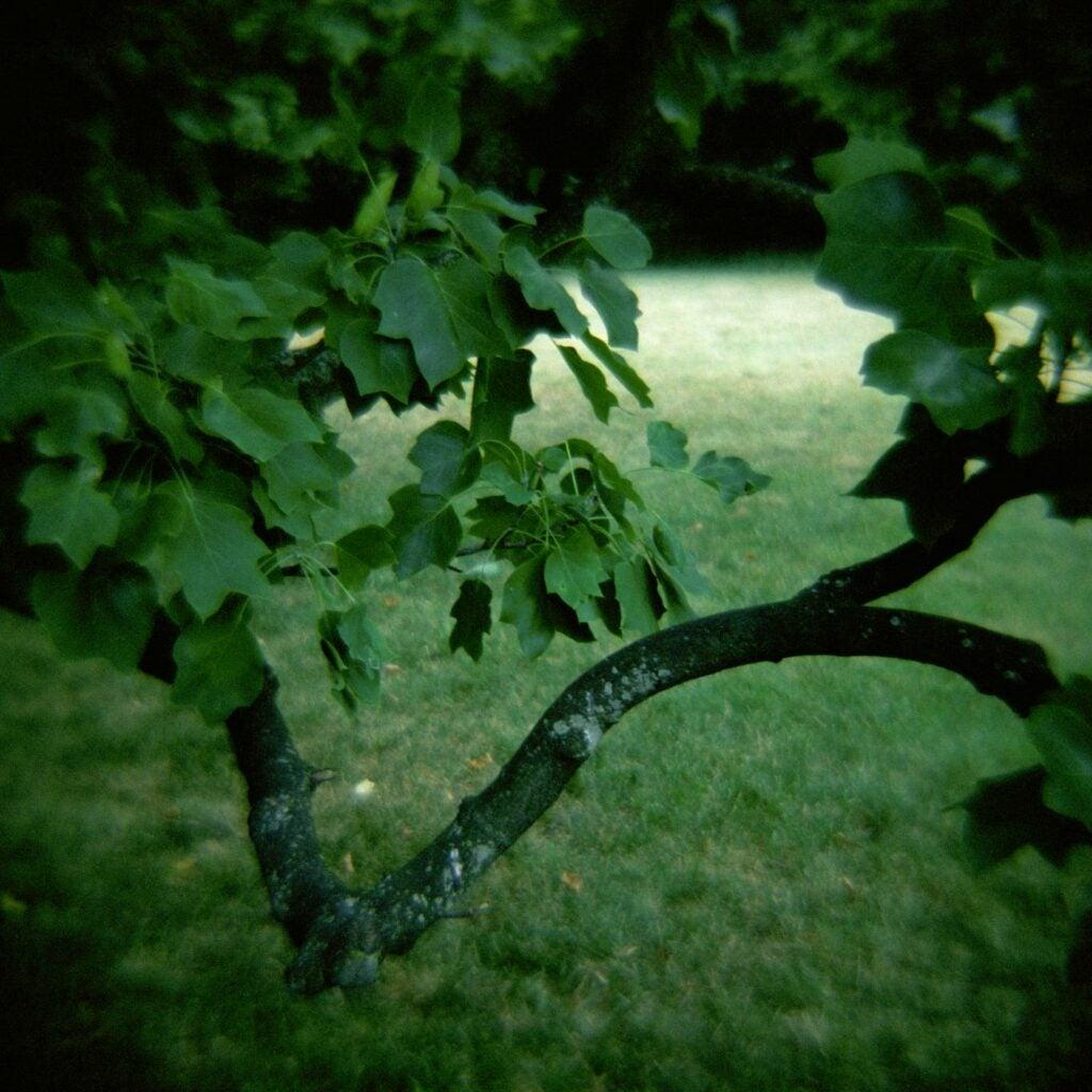 trees35.jpg