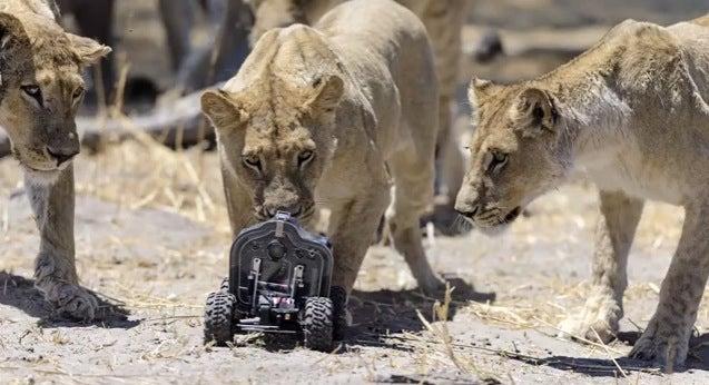 lion camera