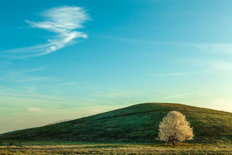Photo Challenge Finalist Gallery: Flowering Trees