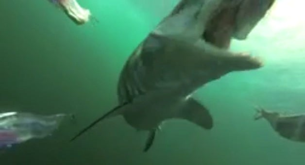 gopro shark