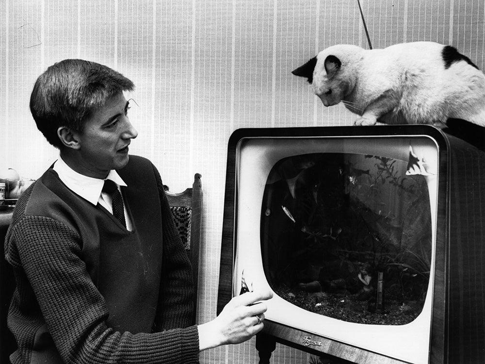 cat on fish tank tv