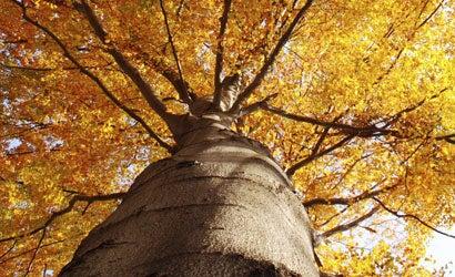 Fall-Into-Photos