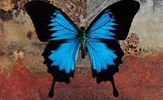 Butterfly Promo