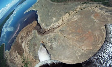 Winged Planet: Photos From The Bird Cameras