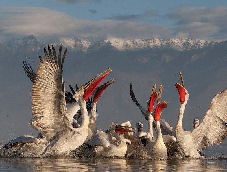 Tips for better bird photography