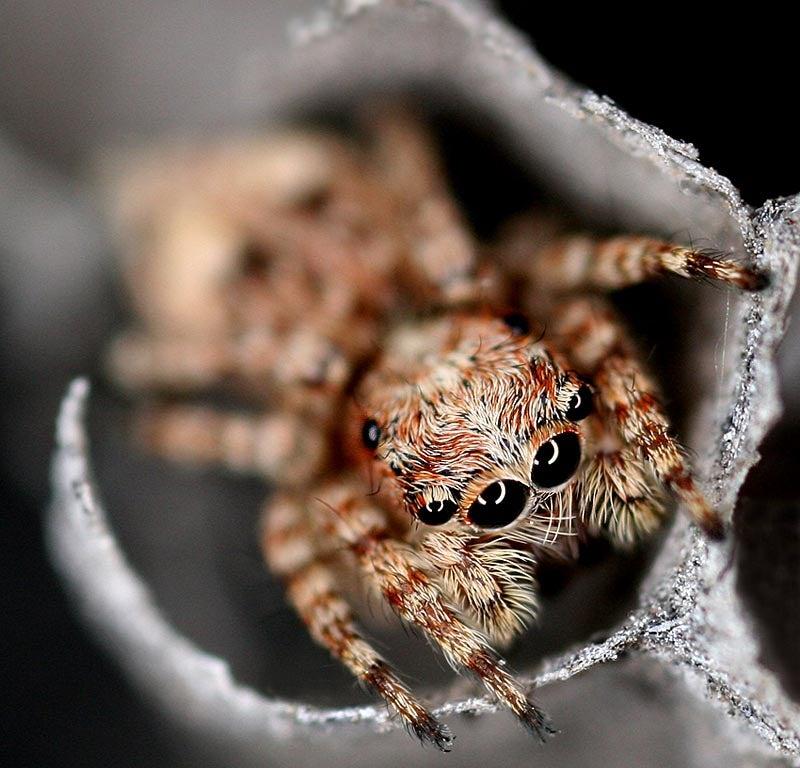 abandoned wasp nest