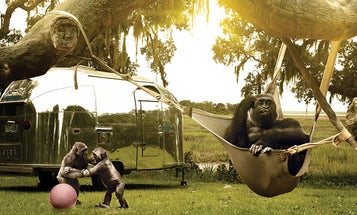 My Project: Going Ape