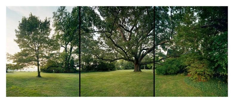 trees30.jpg