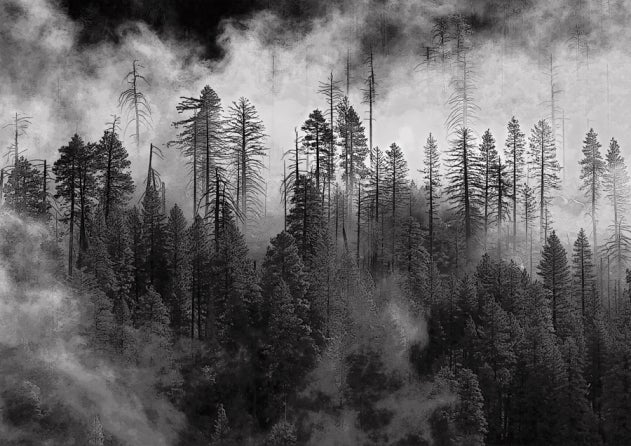 Black and white landscapes main