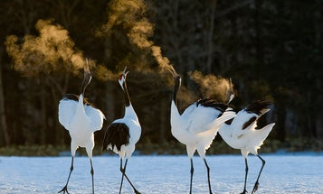 Tips From a Pro: David Tipling on Beginning Bird Photography