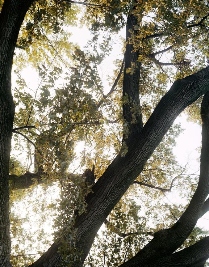 trees31.jpg