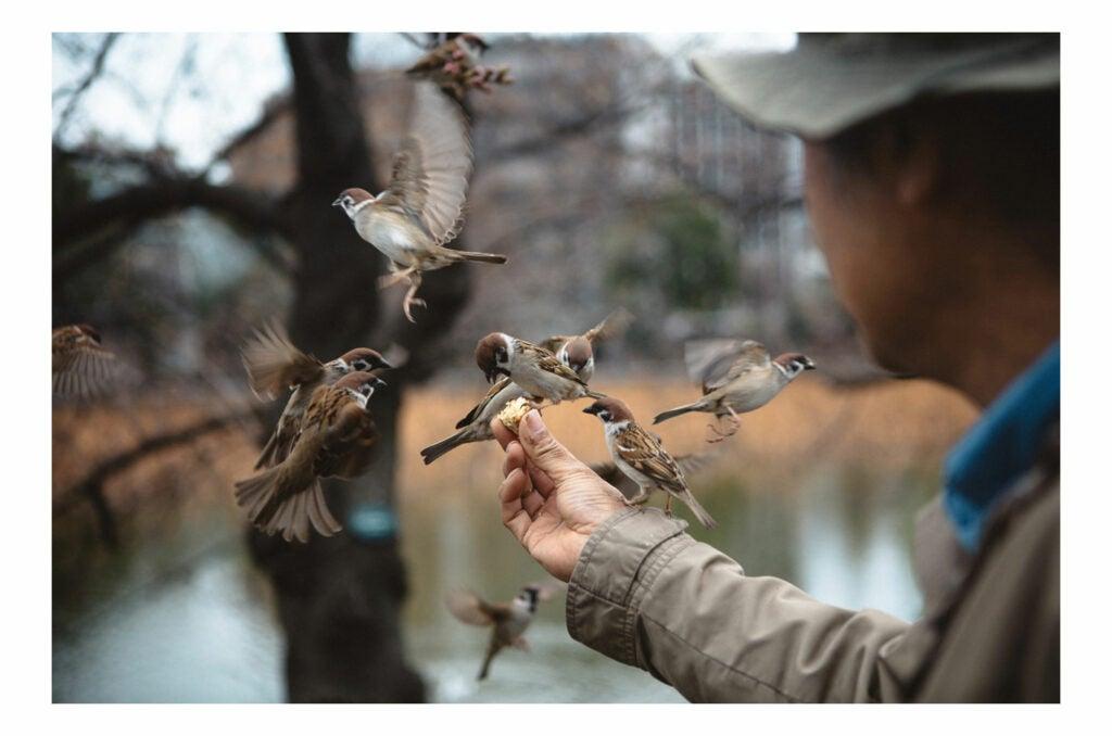 man feeding several small birds