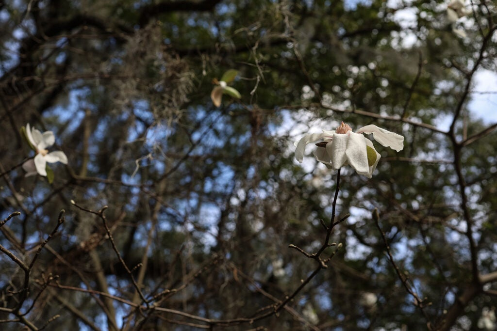 flowers and treetops