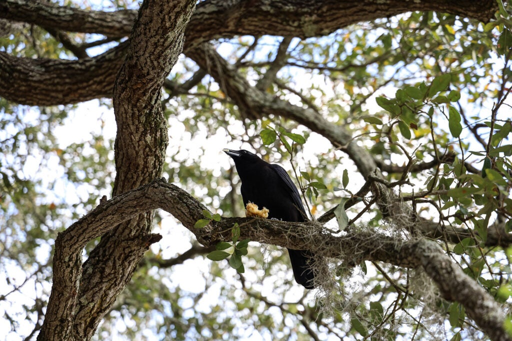 black bird in tree branch