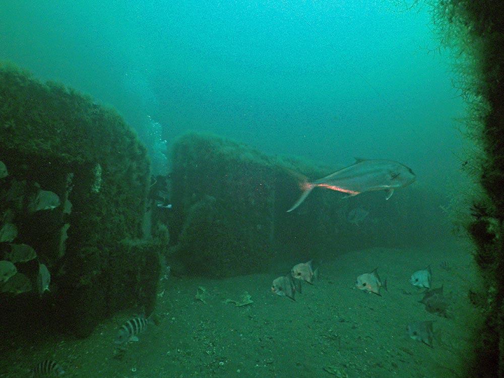 subway train car reefs under water
