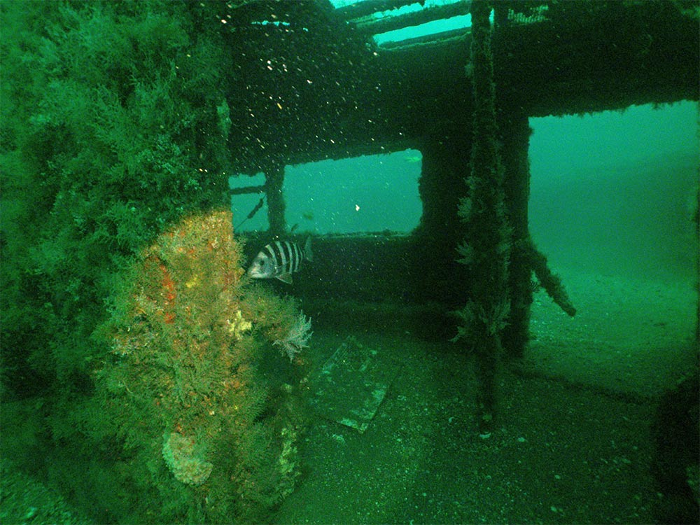 redbird reef subway train cars underwater