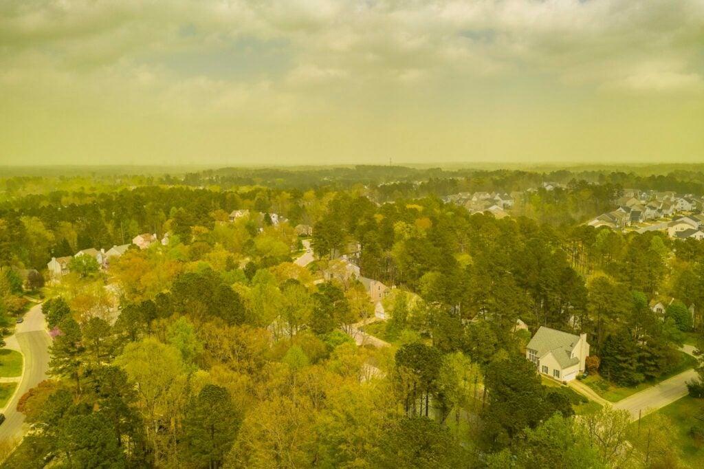 trees release pollen