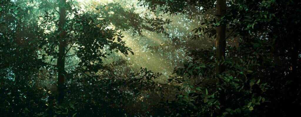 """""""Clearing,"""" 2003"""