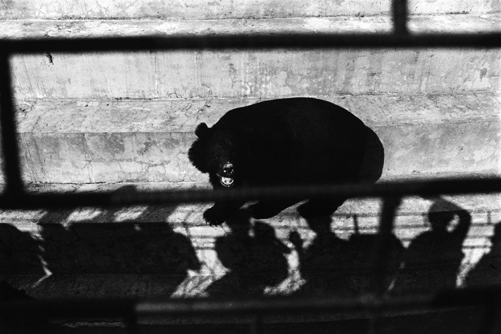 "Portfolio: Patrick Brown's ""Trading to Extinction"""
