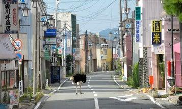 Japanese Photographers Reflect on the Devastation of 3/11
