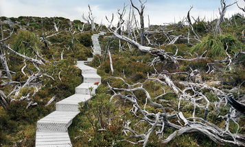 How Rachel Sussman Photographs the World's Oldest Living Things