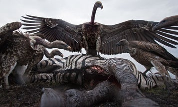 Books of the Year: Anup Shah's Serengeti Spy