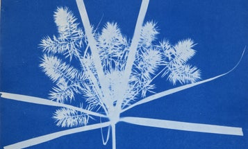 Google Doodle Tributes Photographic Pioneer Anna Atkins