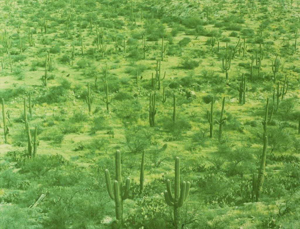 """""""Saguaro"""