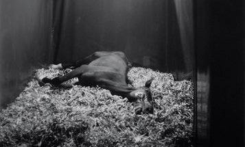 While You Were Out: Andrea Modica's Horse Sense