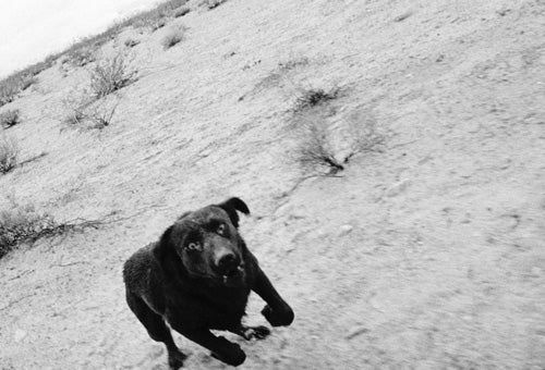 John Divola, Chased By Dogs, Turns a Wild Encounter Into Art