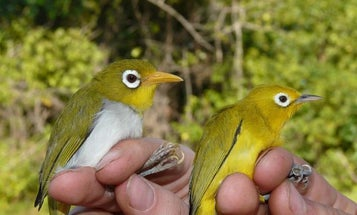 Two newly discovered birds are a product of Indonesia's 'evolutionary playground'