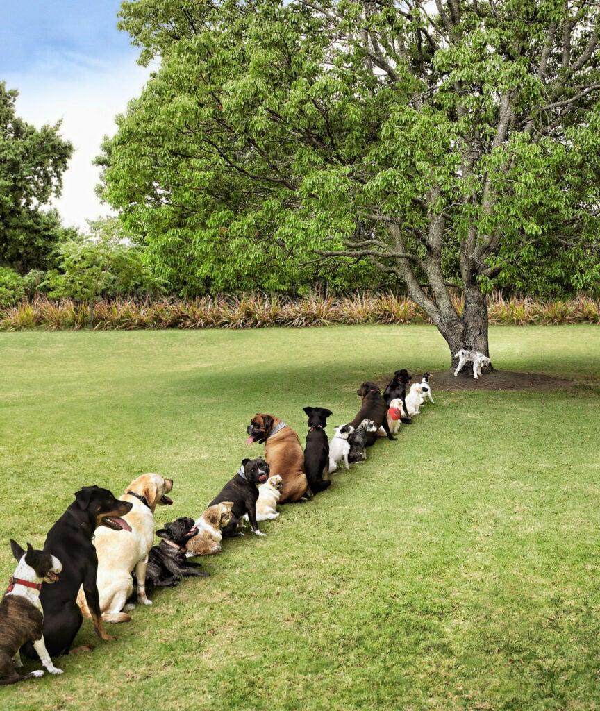 httpswww.popphoto.comsitespopphoto.comfilesfilesgallery-imagesBark-in-the-Park.jpg