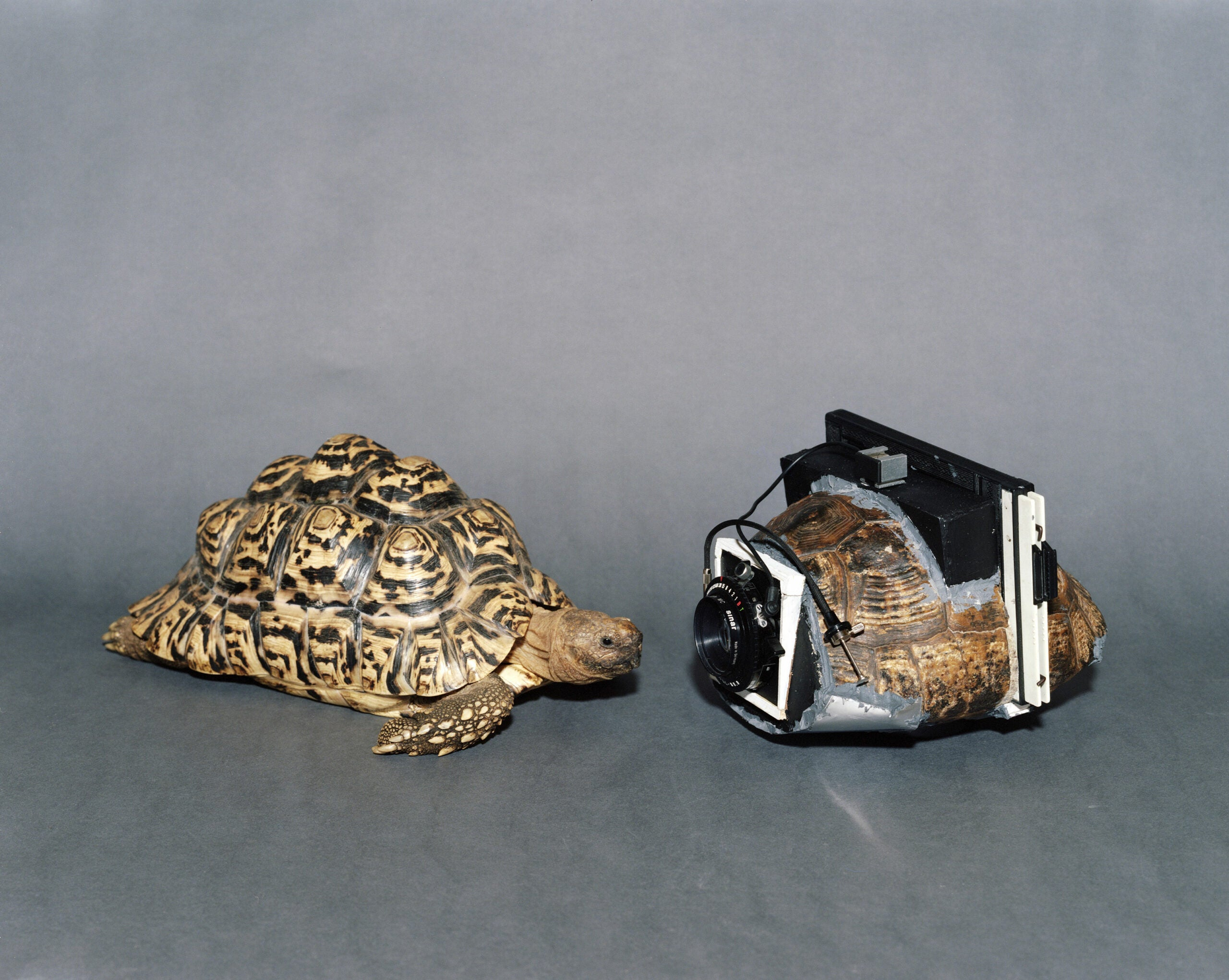 Turning Turtles Into Cameras With Onorato & Krebs
