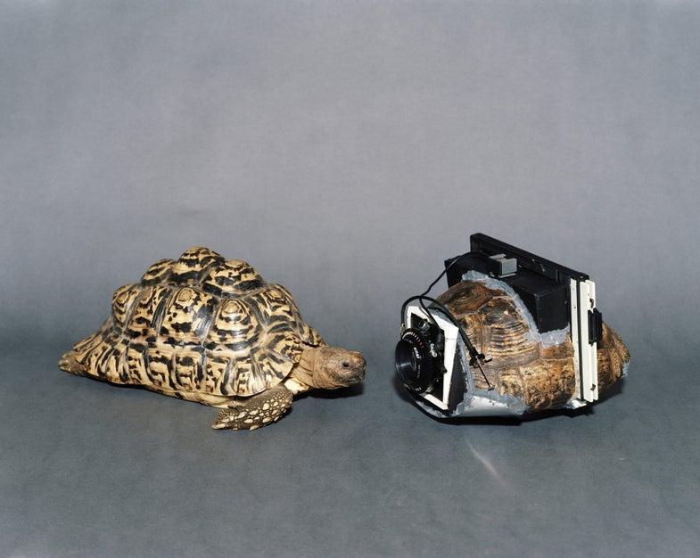 Turning Turtles Into Cameras With Onorato & Krebs