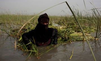 Outtakes: Carolyn Drake's Unpublished Iraqi Marsh Arabs Assignment for Nat Geo